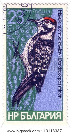 Bulgaria- Circa 1978: A Stamp Printed In Bulgaria Shows Bird Lesser Spotted, Series Woodpeckers, Cir