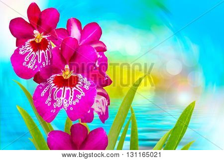 Close up of beautiful plant orchid flower