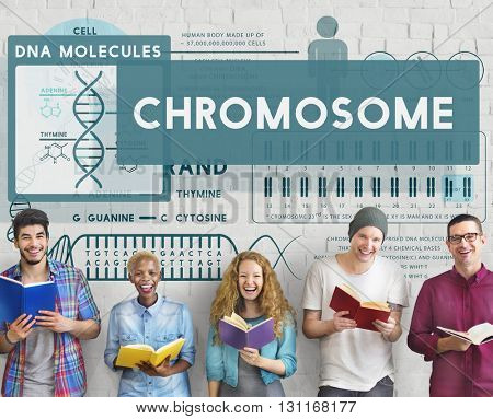 Chromosome Study Knowledge People Education Concept