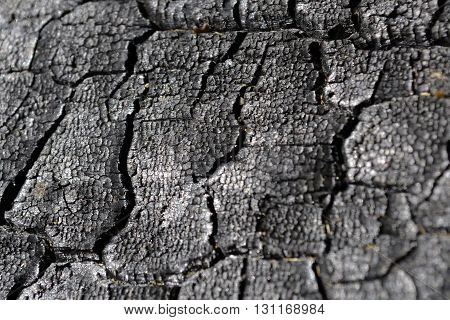 Charred wood with cracks . Charcoal. Firewood.