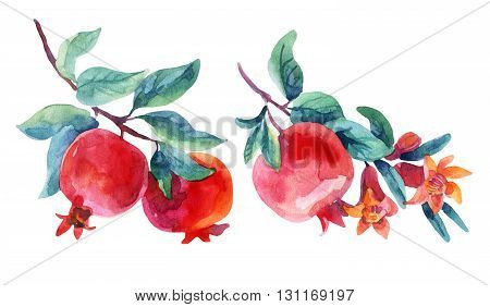 Watercolor pomegranate bloom branches set. Pomegranate fruit and flower isolated on white background. Hand painted illustration