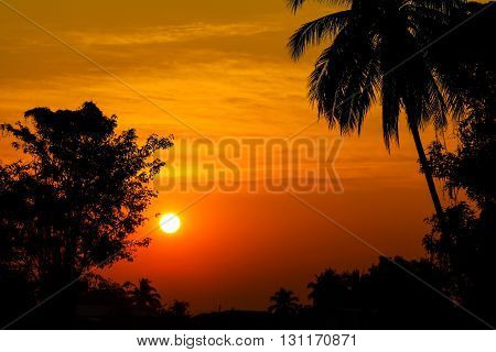 trees silhouette on beautiful sunrise for background