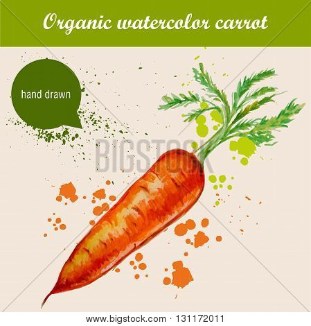 Vector watercolor hand drawn carrot with leaves and watercolor drops. Organic food illustration.