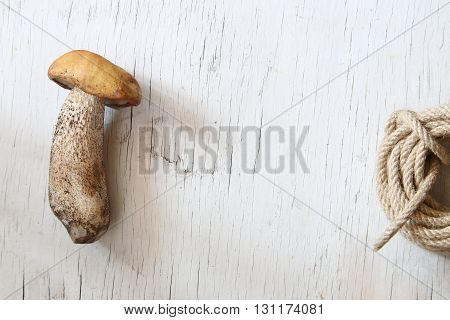 Wild mushroom on the table with copy space