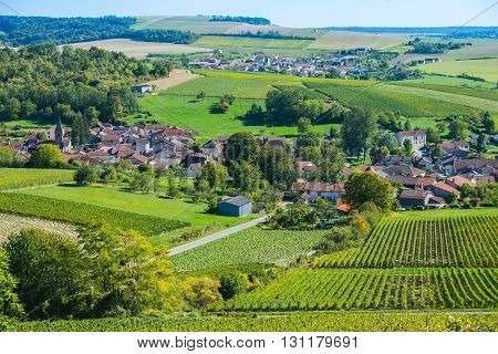 Champagne vineyards in the Cote des Bar area of the Aube department near to Colombe la Fosse, Champagne-Ardennes, France, Europe