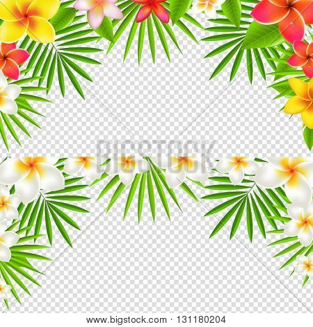 Tropical Frangipani Borders Set, Isolated on Transparent Background, With Gradient Mesh, Vector Illustration