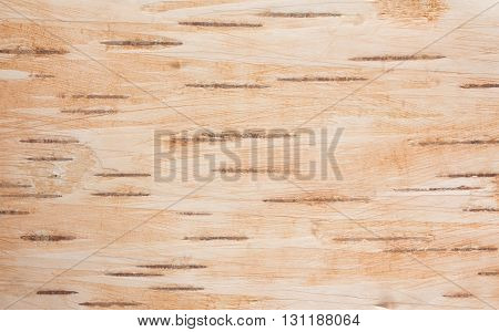 Natural background from birch of a bark