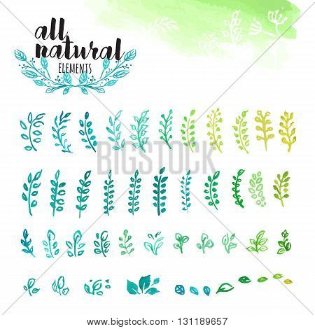 Set of hand drawn watercolor natural elements, leaves and tree branches. Vector illustrations for graphic and web design, for natural and organic products, spa and cosmetics, environment.