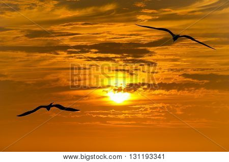 Birds silhouette is a group of birds flying silhouetted with a beautiful glowing orange and yellow sunset beaming in the background