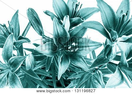close-up bouquet of green flowers with white background