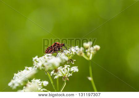 Little Beetle Sitting On Plant
