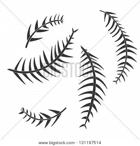 Palm tree leaf. Palm tree vector. Palm tree eps. Palm tree icon Palm tree logo. Palm tree art. Palm tree web. Palm tree tall. Palm tree big. Palm tree ui. Palm tree flat. Palm tree isolated. Palm tree