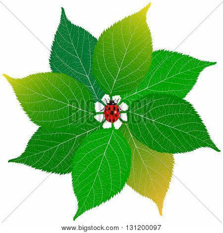 Green leaf with ladybug on white background