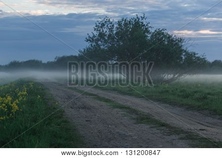 Dirt Road in a wheat field on a foggy morning.