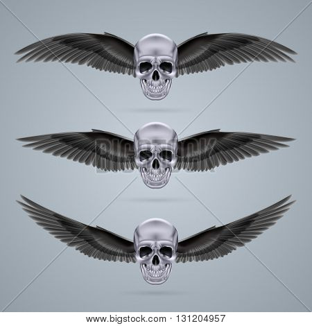 Three metal chrome skulls with two crow wings each.