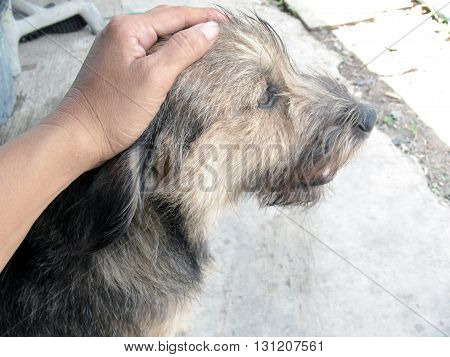 friendship between human and dogdog feeling relax hand touch on head of dog