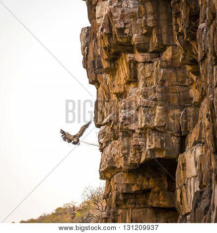 Vulture Finding Perch