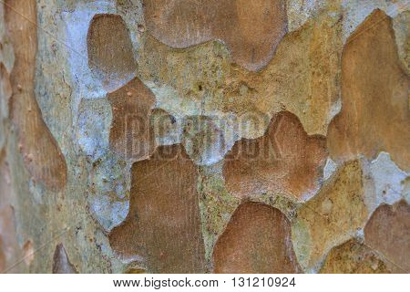 Tree bark texture background texture of bark wood use as natural background