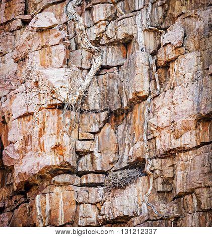 Vulture Nest On Cliffs