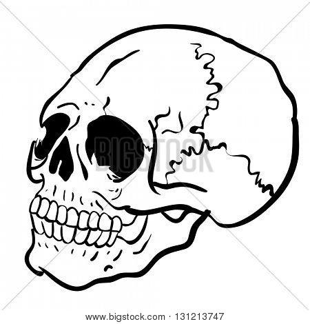black and white skull cartoon illustration