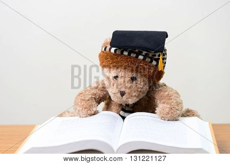 Teddy bear graduate reads a book.back to school.education concept.