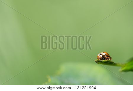 Ladybug on a leaflet. Insects. Background wild nature. Macro.