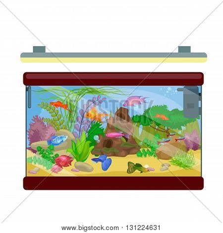 Aquarium isolated on white. Fish, seaweed underwater, marine animal vector illustration