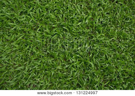 The Natural Green Fresh Grass for background