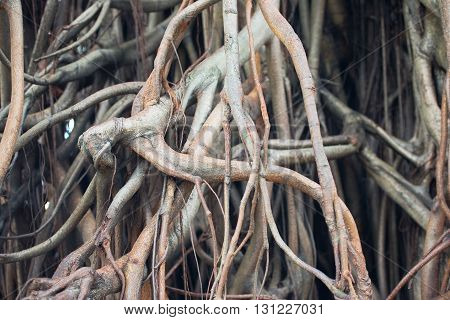 Mistical background of old tree roots closeup photo