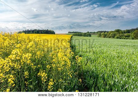 Spring Countryside With Fields, Forests And Blue Sky
