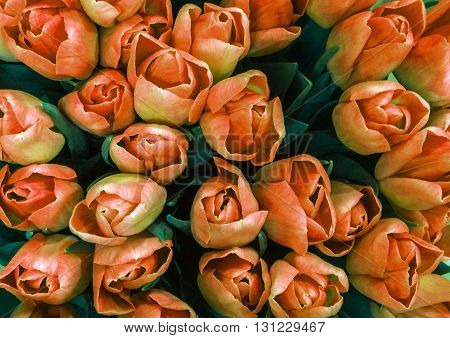 Holiday Bouquet spring flowers orange tulips. flowers background.