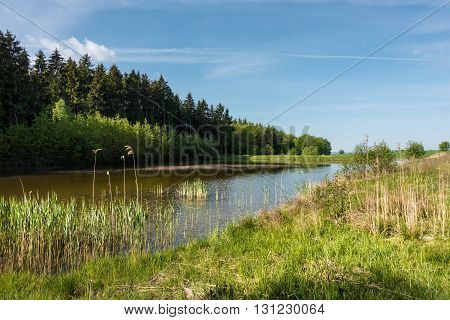 Pond And Forest Under Blue Sky In Spring Countryside