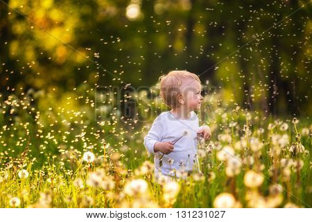 Boy Playing On Dandelion Meadow