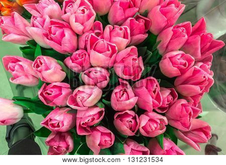 Tulip. Color tulips bouquet of tulips tulips isolated tulips in bouquet beautiful tulips.