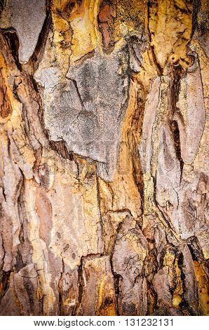 Close up Bark Tree Texture in vintage light