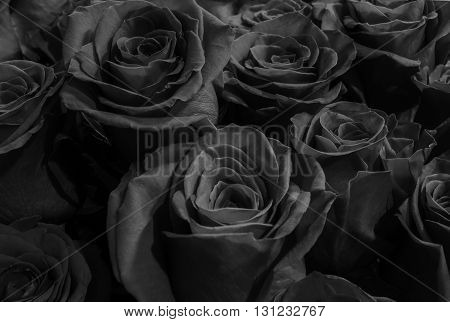 Beautiful large festive bouquet of roses. black roses clouse-up.