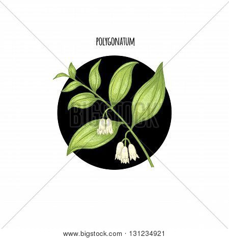 Vector illustration of polygonatum flower in a black circle on a white background. Design of packaging cosmetics shampoos health supplements.