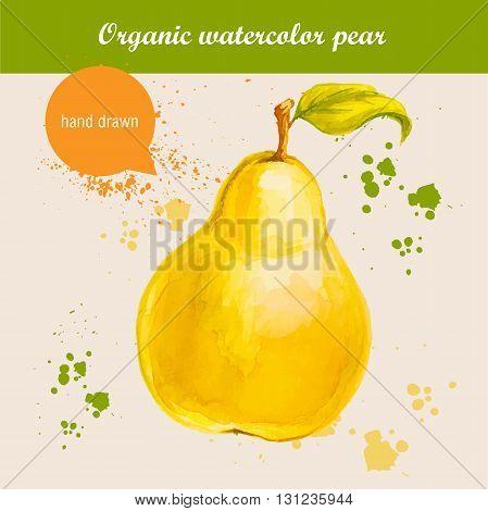 Vector watercolor hand drawn fresh organic pear with watercolor drops. Organic food illustration.
