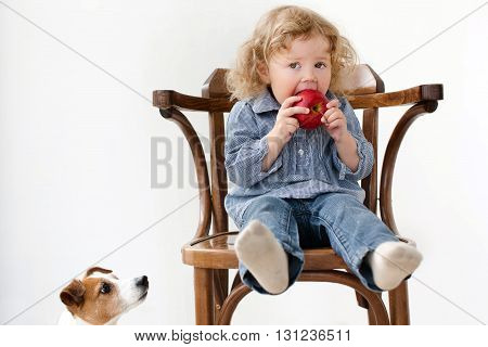 Little two year old girl eating big red apple while sitting in wood chair in studio. Baby looking straight to the camera. Near dog looking to the apple isolated background