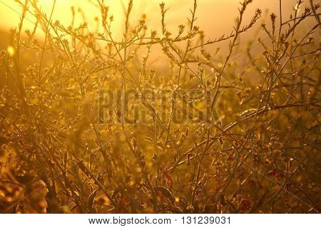 Beautiful autumn yellow grass swaying at sunset.