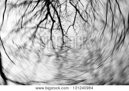 Black and white photo of tree branches on background of winter sky