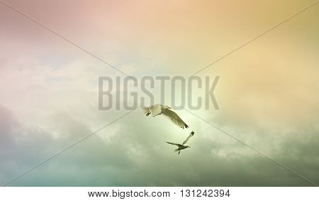 Two Seagulls flying with pastel cloud background