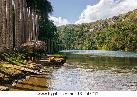 Tropical palm tree forest near the river. High palm trees growing near river.