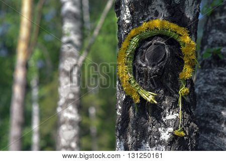 Forgotten on a birch wreath of dandelions