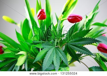 Marijuana Green Fresh Large Leafs ( Cannabis), Hemp Plant In A Nice Spring Flower Bouquet With Pink