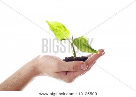 Fondo floral: un tema de crecimiento