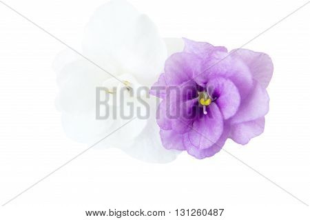 Beautiful pink flowers with thin stems on an isolated white background