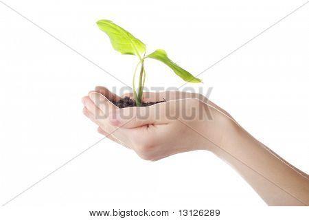 Blumen Hintergrund: ein Thema des Wachstums