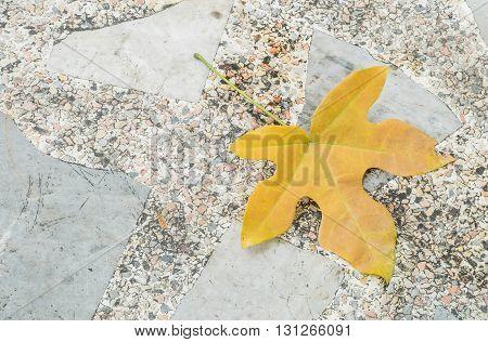 Closeup fallen brown leaf on stone floor texture background