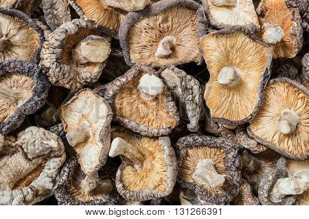 Closeup surface group of dried mushroom background